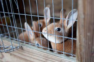 Bunnies in Rhode Island