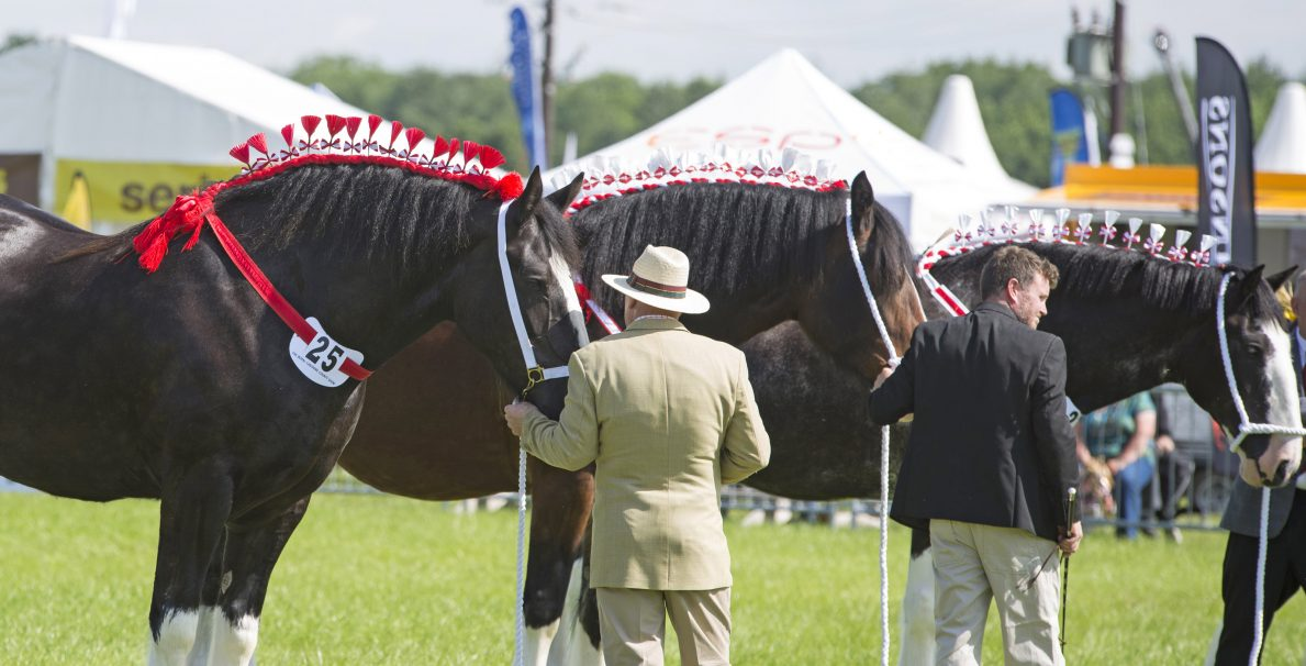 Trade Stands Hoys 2015 : Delma nulty representing the royal cheshire county show at hoys