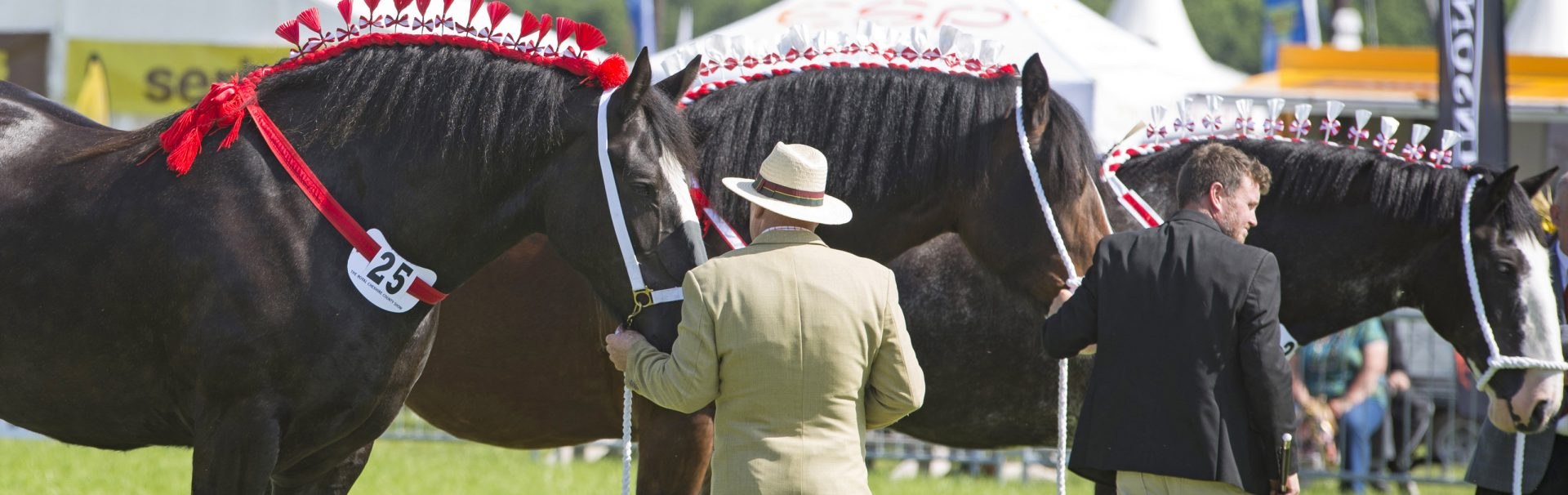 Trade Stands Hoys 2015 : Shire horses the royal cheshire county show