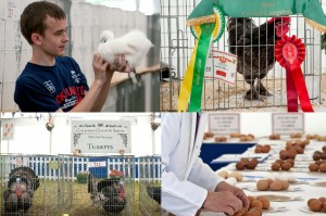 poultry and egg show compilation Royal Cheshire Show