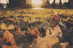 forest-meadow-leaves-autumn-a