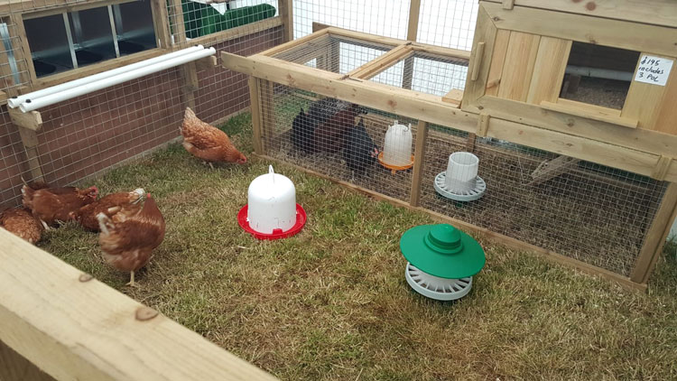 Agri-Centre-Chickens